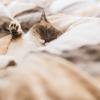 ネット通販で買える睡眠改善クッズ一覧【ベット、枕、時計、サプリ、本】