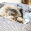 時間よりも質を重視した深睡眠の大切さ【疲労回復とアンチエイジング】