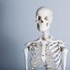 【美肌対策】しわ、たるみ、老け顔の原因は骨密度が大きく関係 高める方法もご紹介